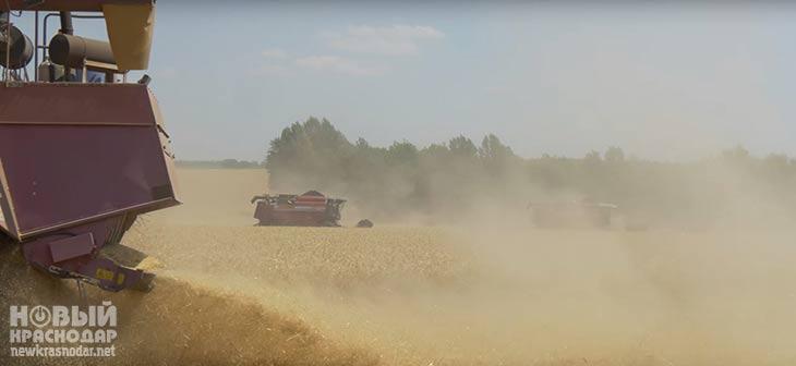 В Краснодарском крае урожай зерна уже составил 6,4 миллиона тонн 1