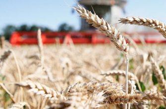 На Кубани собрано более 10 миллионов тонн зерна 8