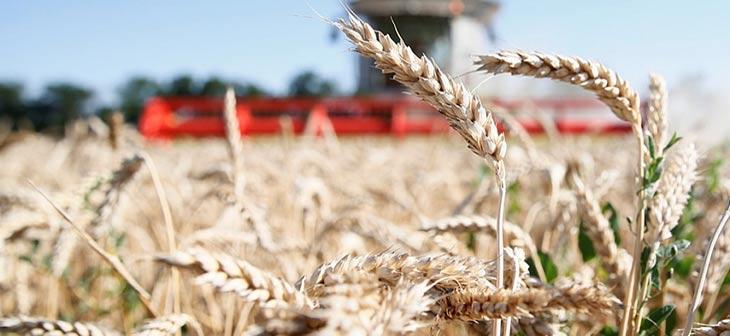 На Кубани собрано более 10 миллионов тонн зерна 1